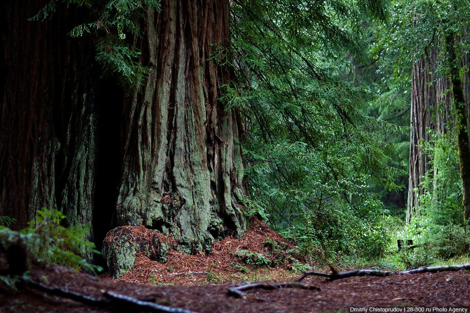 Америка деревья заповедник природа