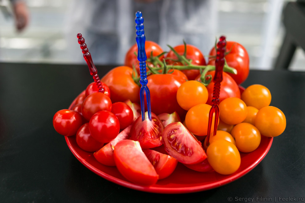овощи познавательно сельское хозяйство