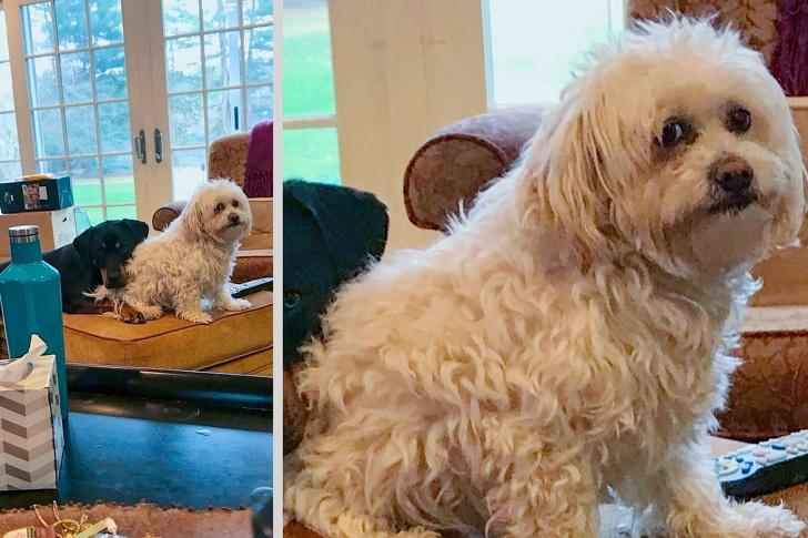 фото животных 2017 фотографии животных фото с животными фото животных питомцы ошибка Фотография поли