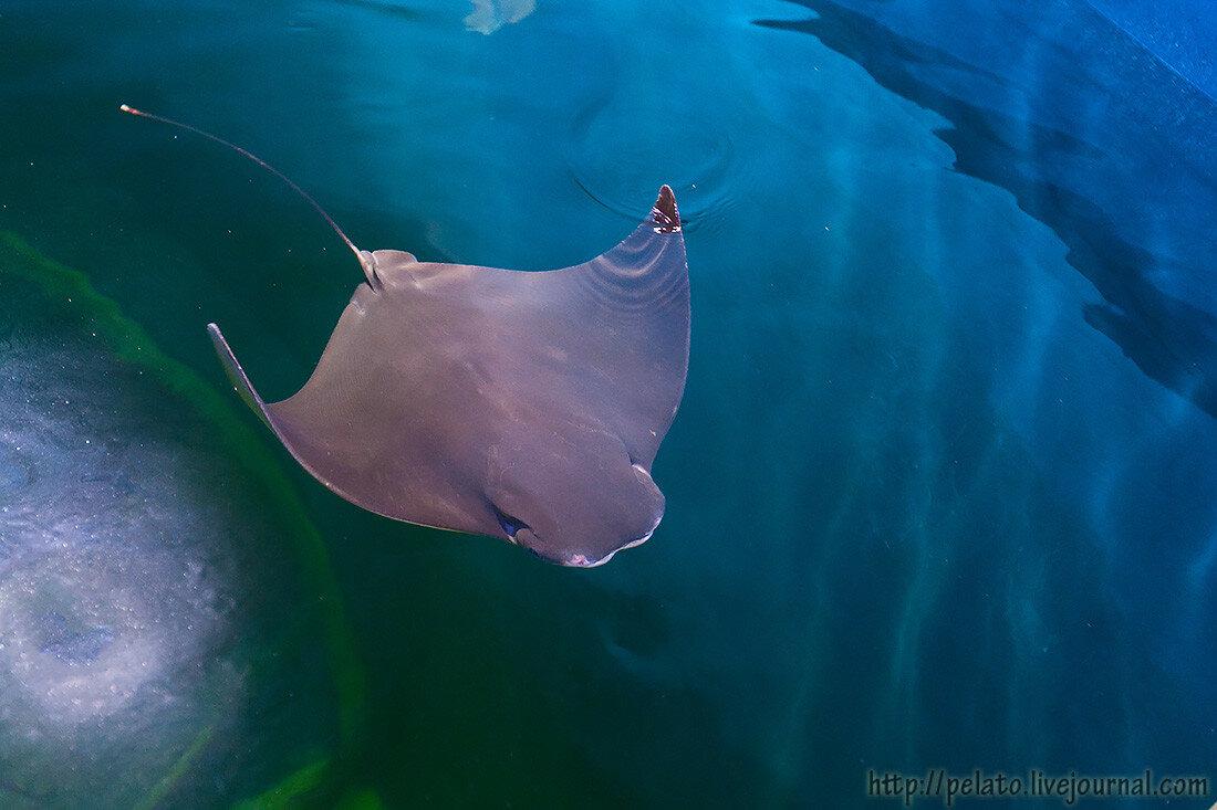 аквариум шарджа ОАЭ sharjah UAE
