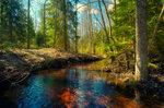 Где-то в апрельском лесу ...