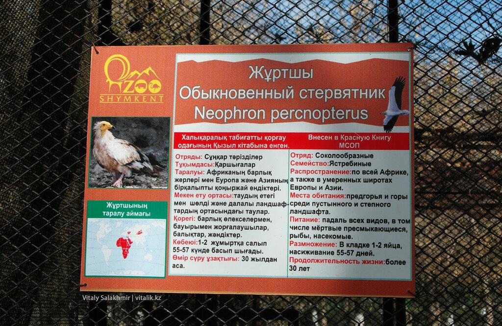 Табличка на клетке стервятника, зоопарк Шымкента 2018