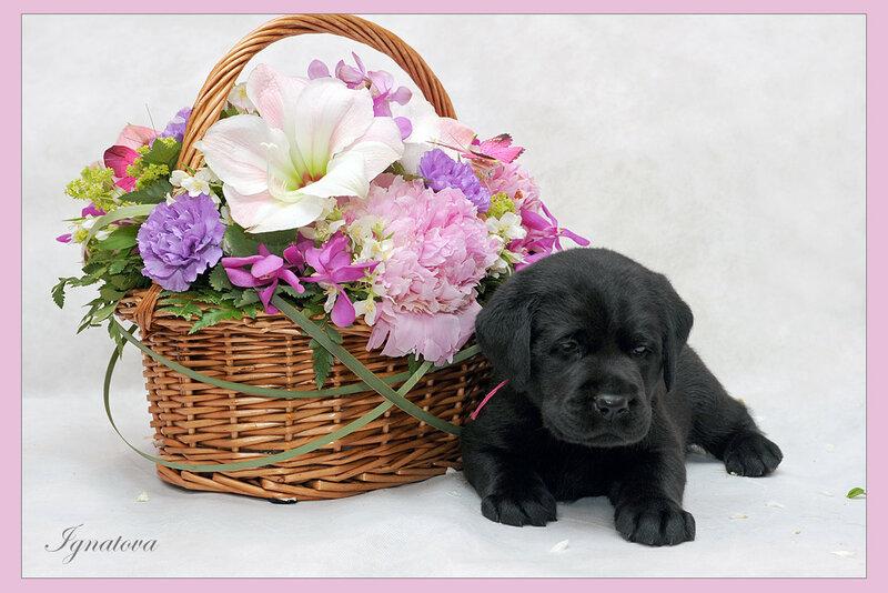 Картинки с собаками поздравление с днем рождения