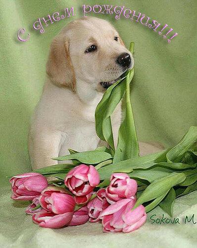 Оригинальная картинка на День рождения с собачками 2021. Бесплатные живые открытки 2021