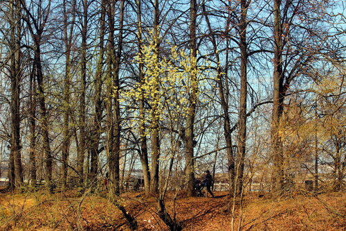Вербный апрель