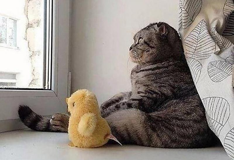СТО лучших фотографий кошек и котят всех времен и народов (101 фото)