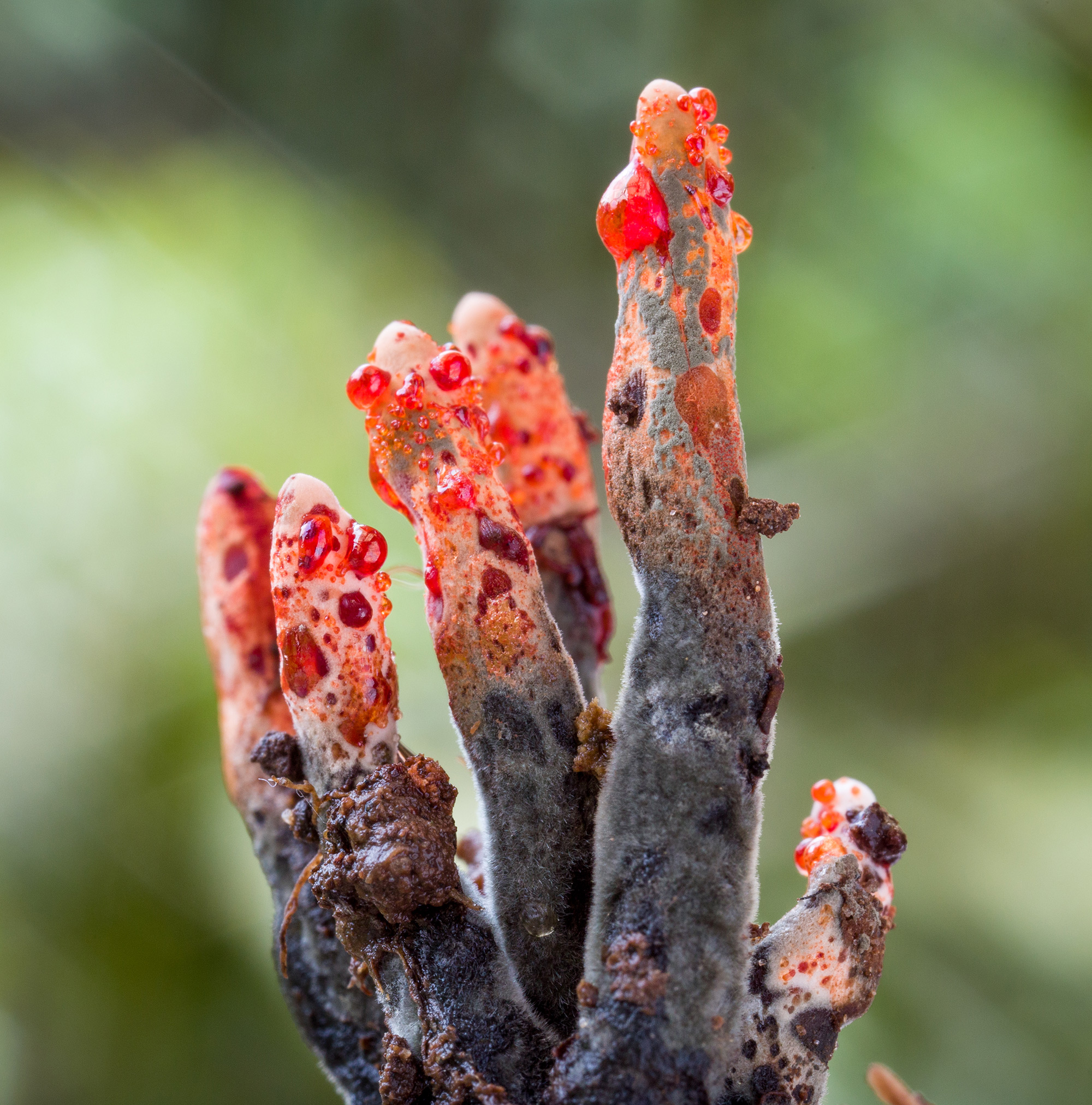 Two Biologists Explore the Remote Rainforests of the Ecuadorian Andes to Document Fungi