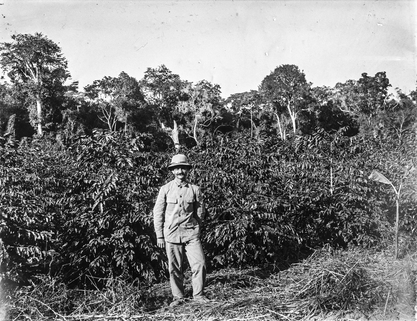225. Человек в тропическом костюме возле плантации кофе