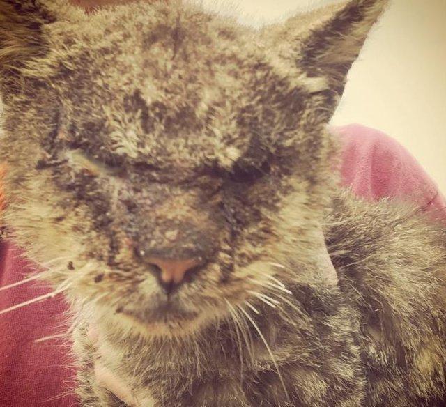 истрия про кота валентино который страдал от ужасной болезни – подкожной чесоткой