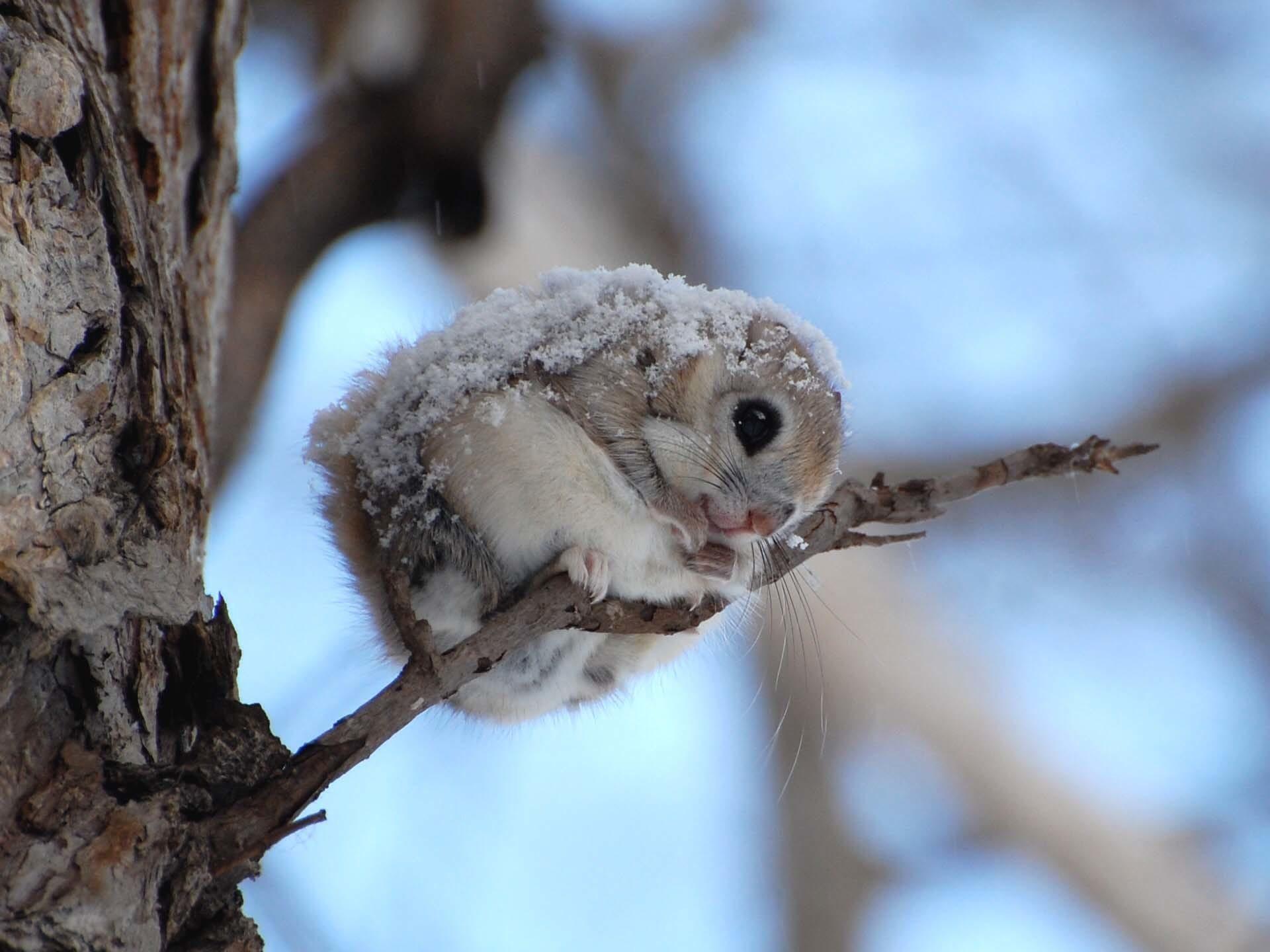 Удивительные снимки животных. Разве это не прекрасно?