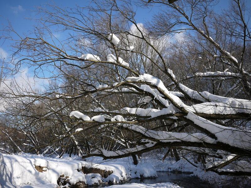 мороз и иней в Сосенках