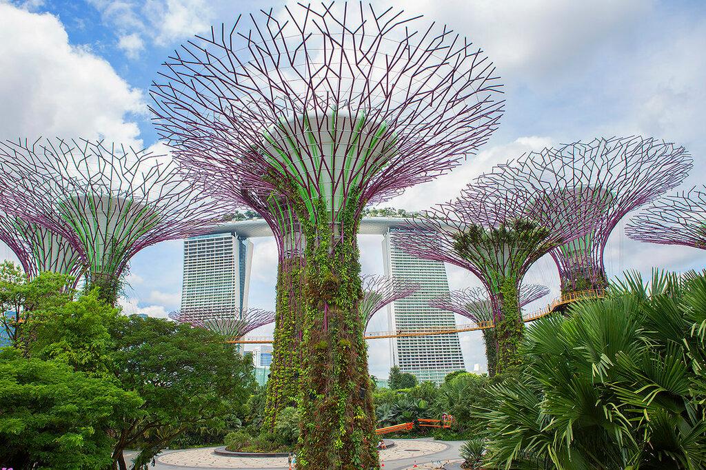 Гигантские деревья у залива.Футуристические сады Сингапура