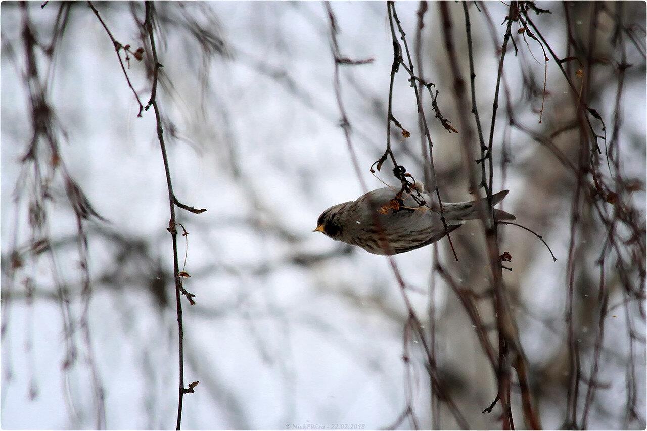 Чечётка [© NickFW.ru - 22.02.2018]