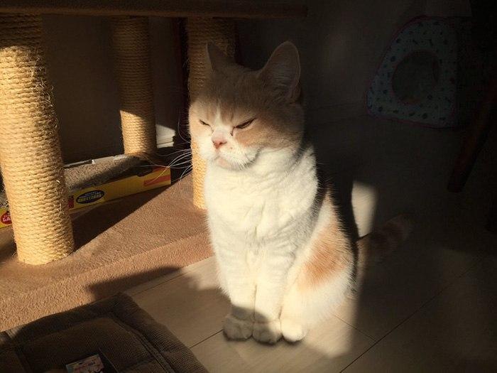 Коюки — самый сердитый кот Японии
