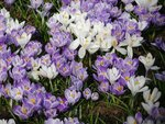 Весна в Парке Горького