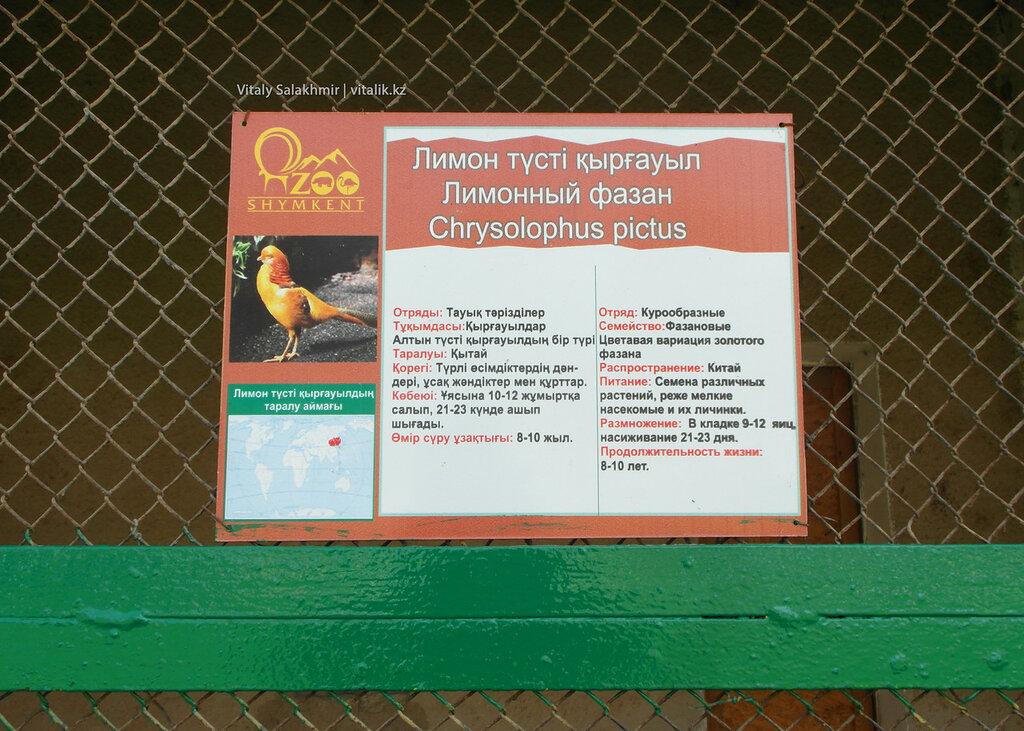 Табличка на клетке, лимонный фазан в зоопарке Шымкента