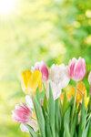 Tulips (6).jpg