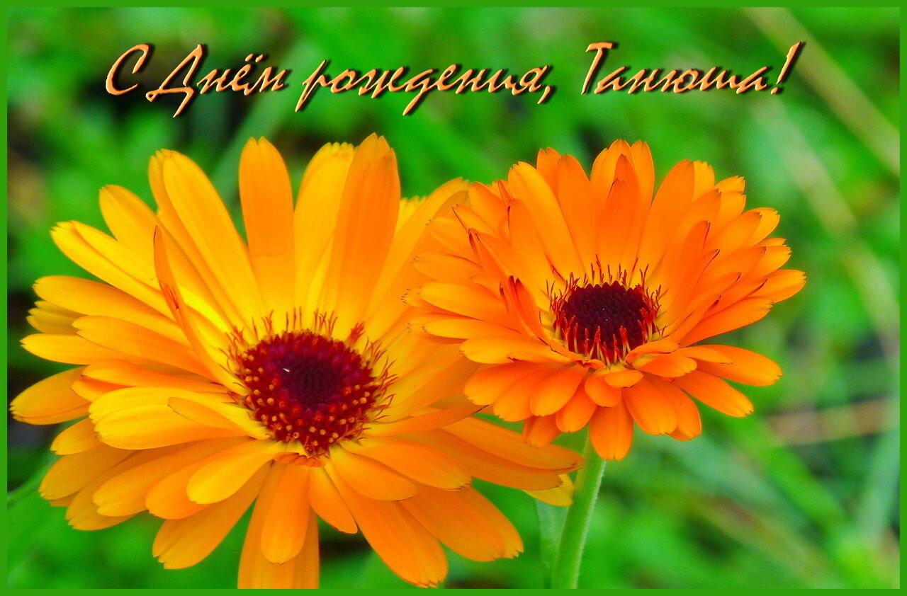 заявил, что фото цветы для тани приведены самые интересные