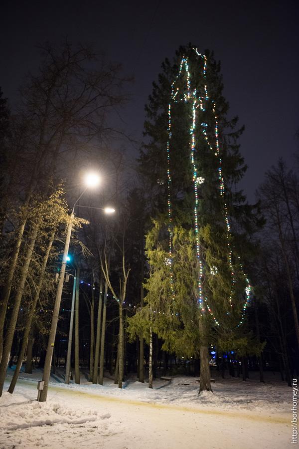 елка в парке зернова в сарове
