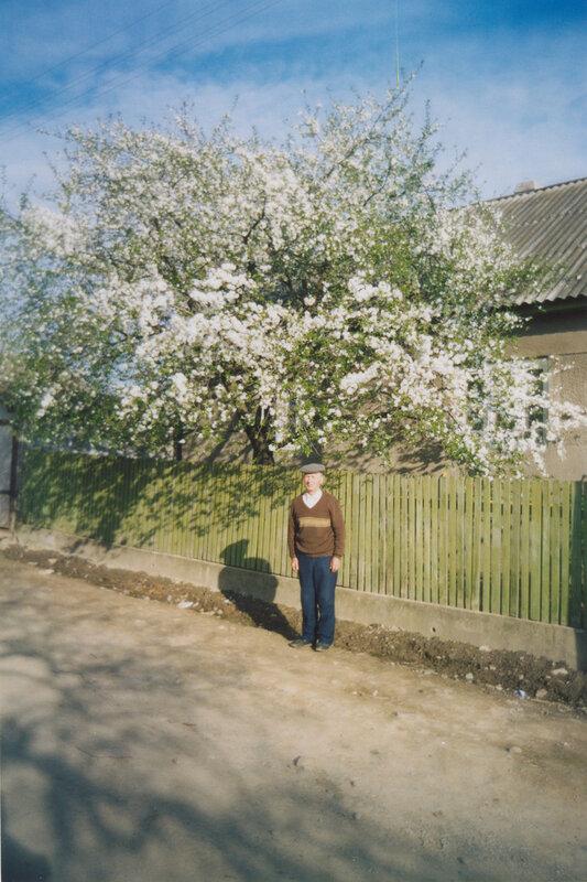 Вишня Владимирская