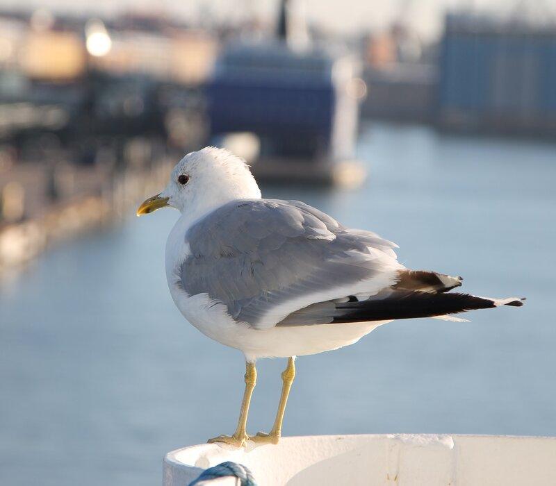 Хельсинки порт