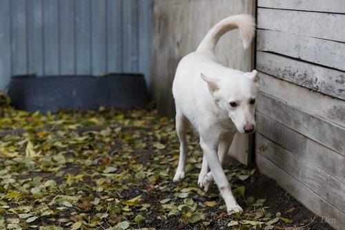 Бланко Нуар собака из приюта в москве догпорт фото