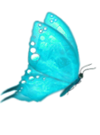 Moonlight Butterflys (111).png