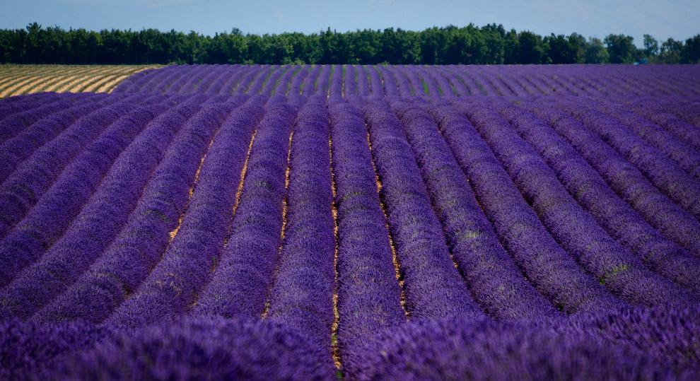 А Италия — «страна телят», получила название благодаря народу витали, который населял нынешний регио