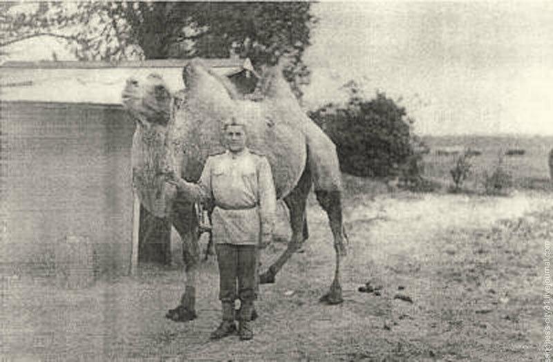 Красноармеец с личным верблюдом