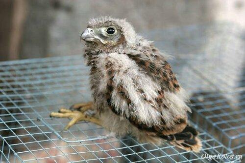 Птичий рынок в Джокьякарте