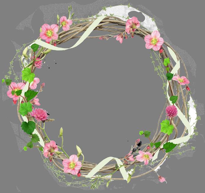 Пионы цветы пнг 1