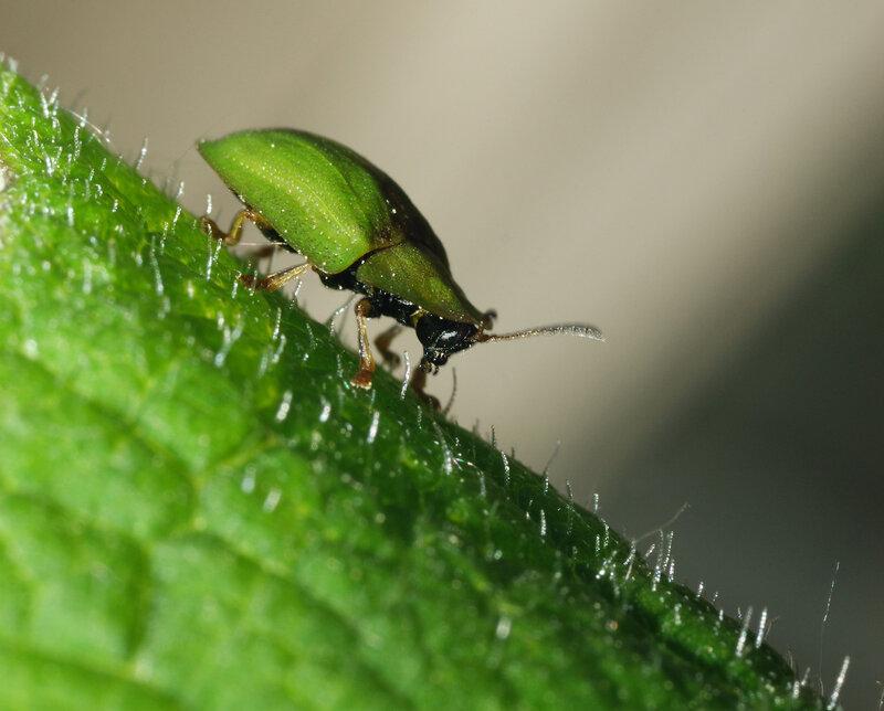 рассказ о насекомых