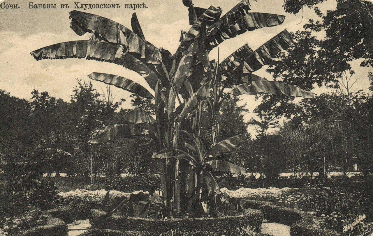 В Хлудовском парке. Бананы
