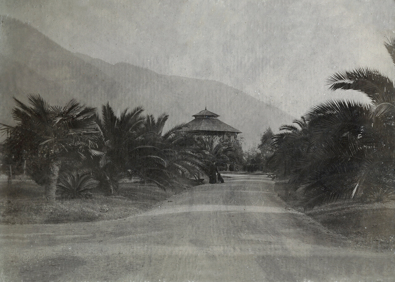 Гагры, декабрь 1910. Пальмовая аллея с ротондой для музыкантов