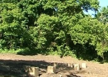 В Днестровском парке Вадул-луй-Водэ незаконно вырубили полгектара леса