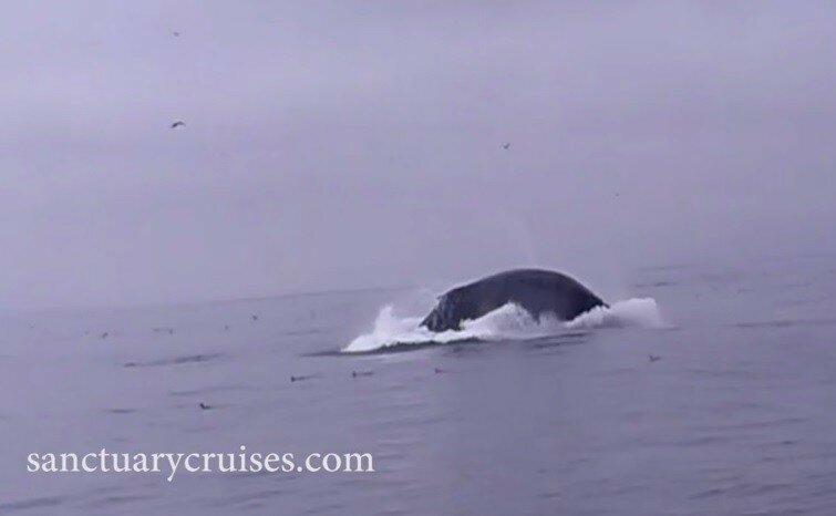 Горбатый кит сбивает лодку с туристами