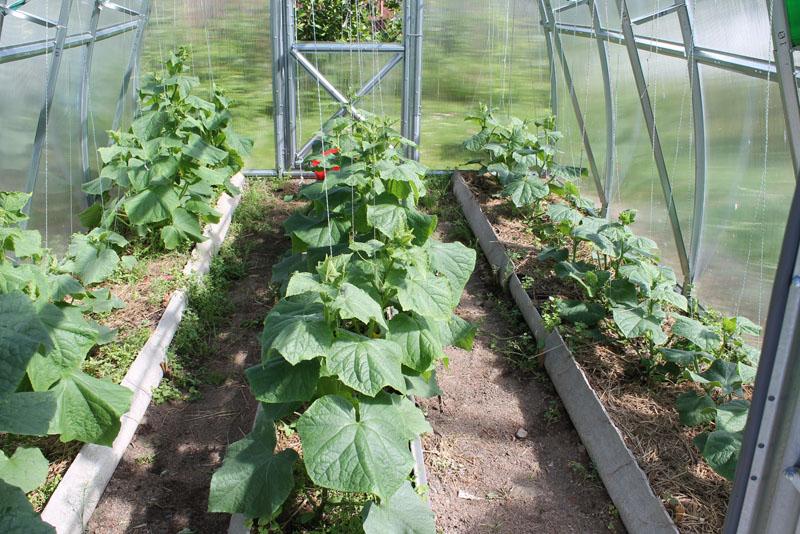 Июнь - Основные работы в саду - фото июня