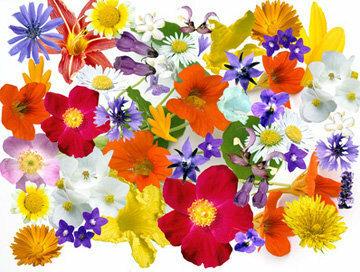 Съедобные цветы для украшения рулета