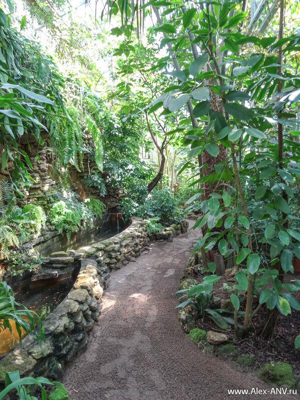 Продолжаем поход по тропическим оранжереям Ботанического сада.