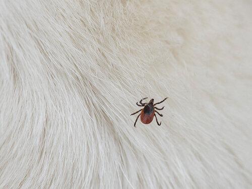 На собаке Автор фото: Владимир Брюхов