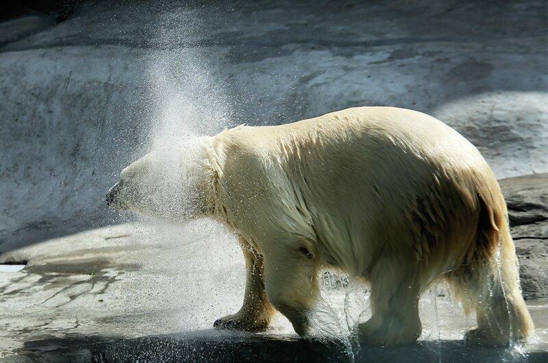 ...Вот так и с гуся вода...только брызг больше...))!!!