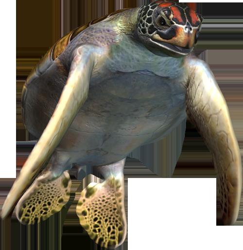 Клипарт PNG -  Морские обитатели