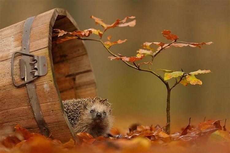 Творчество фотографа Эдвина Каца. Фотографии животных