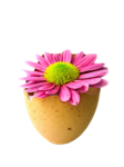 LF-EggFlower-16032014.png
