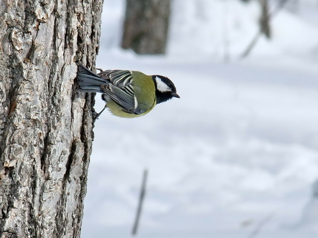 Птицы на Кумыске