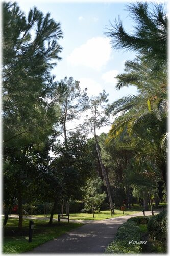 Paloma Foresta Resort & Spa 5* (Кемер)