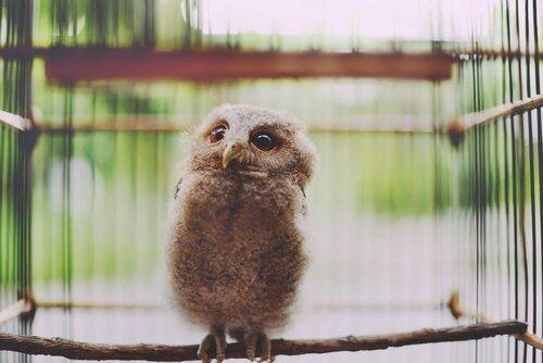 owls02.jpg