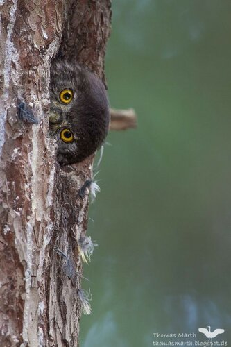 owls22.jpg