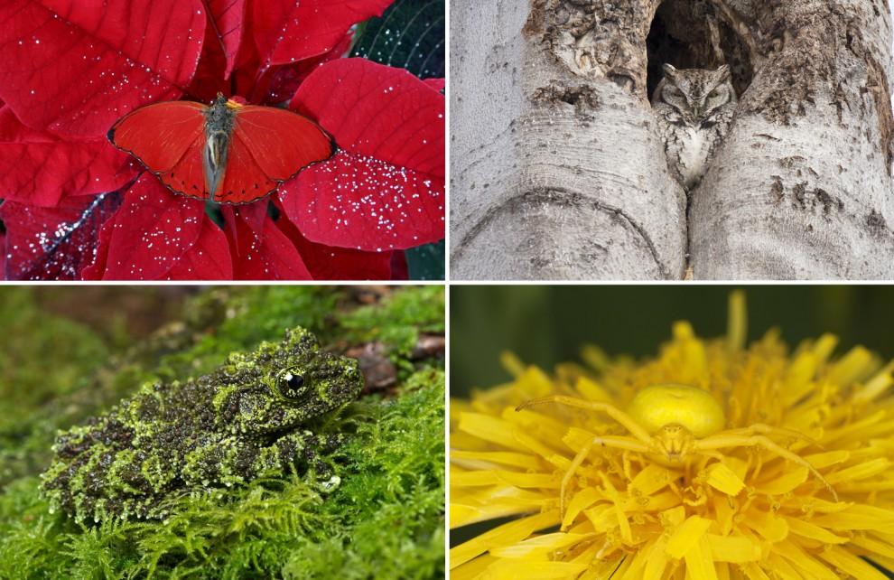 Маскировщики из мира фауны (21 фото)
