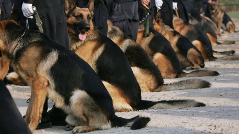домашние животные клонирование собаки